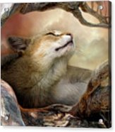 Wildcat Sunrise Acrylic Print by Carol Cavalaris