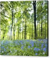 Wildflowers In A Forest Of Trees Acrylic Print by John Short
