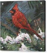 Winter Cardinal Acrylic Print by Nadine Rippelmeyer