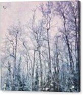 Winter Forest Acrylic Print by Priska Wettstein