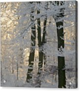 Winter Sun Acrylic Print by Odd Jeppesen