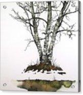 Winters Birch Acrylic Print by Carolyn Doe