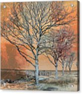 Winter's Dawn Acrylic Print by Shawna Rowe
