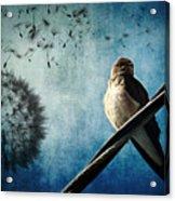 Wishing Swallow Acrylic Print by Nancy  Coelho