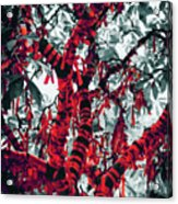 Wishing Tree Acrylic Print by Wim Lanclus