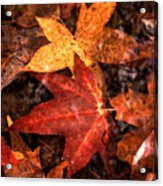 With Love - Autumn Pond Acrylic Print by Theresa  Asher