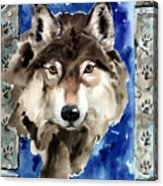 Wolf Acrylic Print by Nadi Spencer