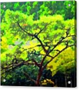 Woods Acrylic Print by Roberto Alamino
