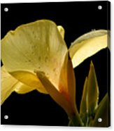 Yellow Canna Acrylic Print by Jeannie Burleson