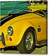 Yellow Cobra Acrylic Print by Gwyn Newcombe