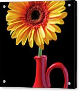 Yellow Fancy Daisy In Red Vase Acrylic Print by Garry Gay
