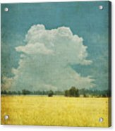 Yellow Field On Old Grunge Paper Acrylic Print by Setsiri Silapasuwanchai