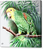 Yellow-headed Amazon Parrot Acrylic Print by Arline Wagner