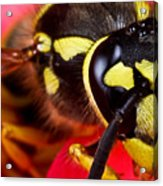 Yellow Jacket Acrylic Print by Ryan Kelly