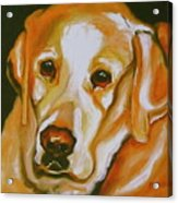 Yellow Lab Amazing Grace Acrylic Print by Susan A Becker
