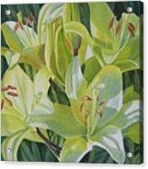 Yellow Lilies With Buds Acrylic Print by Sharon Freeman