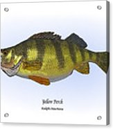 Yellow Perch Acrylic Print by Ralph Martens