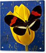 Yellow Tulip With Orange And Black Butterfly Acrylic Print by Garry Gay