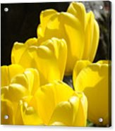 Yellow Tulips Floral Art Prints Nature Garden Acrylic Print by Baslee Troutman