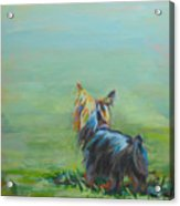 Yorkie In The Grass Acrylic Print by Kimberly Santini