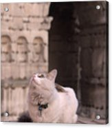 Young Cat Old Monument Acrylic Print by Fabrizio Ruggeri