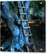 Young Woman Climbing A Tree Acrylic Print by Jill Battaglia