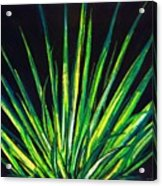 Yucca Acrylic Print by Melvin Moon