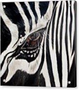 Zebra Eye Acrylic Print by Ilse Kleyn