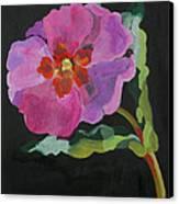 Cistus New Zealand Canvas Print by Deborah Barton