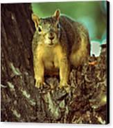 Fox Squirrel Canvas Print by Robert Bales