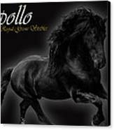 Friesian Stallion Canvas Print by Royal Grove Fine Art