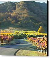 The Hills Of Clos La Chance Winery Canvas Print by Artist and Photographer Laura Wrede