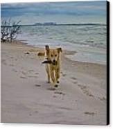 Beach Run Canvas Print by Mary  Swann