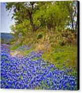Bluebonnet Meadow Canvas Print by Inge Johnsson