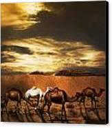 Camels Canvas Print by Jelena Jovanovic