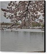 Cherry Blossoms - Washington Dc - 011336 Canvas Print by DC Photographer