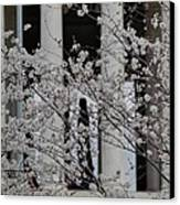 Cherry Blossoms With Jefferson Memorial - Washington Dc - 01131 Canvas Print by DC Photographer