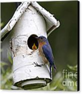 Eastern Bluebird Canvas Print by Linda Freshwaters Arndt