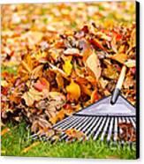 Fall Leaves With Rake Canvas Print by Elena Elisseeva