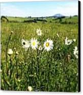 Field Of Flowers Canvas Print by Les Cunliffe