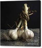 Garlic Canvas Print by Bernard Jaubert