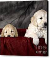Golden Retriever Puppies Canvas Print by Angel  Tarantella