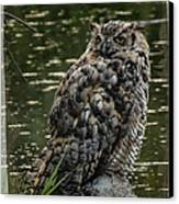 Great Horned Owl Canvas Print by Ernie Echols