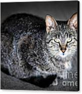 Grey Cat Portrait Canvas Print by Elena Elisseeva