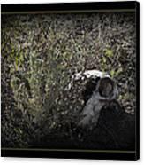 I See You Canvas Print by Ernie Echols