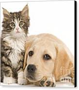 Labrador And Forest Cat Canvas Print by Jean-Michel Labat