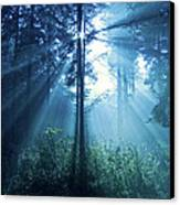 Magical Light Canvas Print by Daniel Csoka