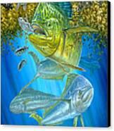 Mahi Mahi Hunting In Sargassum Canvas Print by Terry  Fox