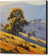 Morning Sunlight  Canvas Print by Graham Gercken