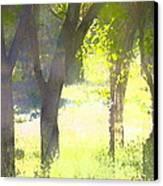 Oaks 25 Canvas Print by Pamela Cooper